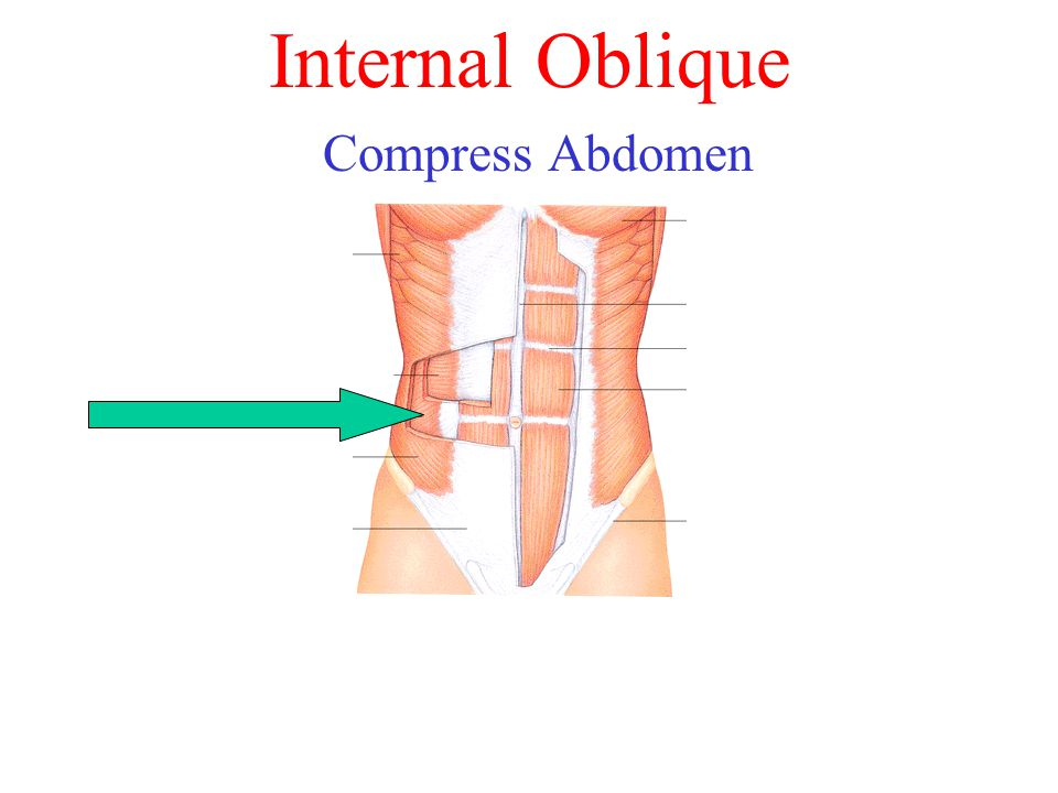 Internal Oblique Compress Abdomen