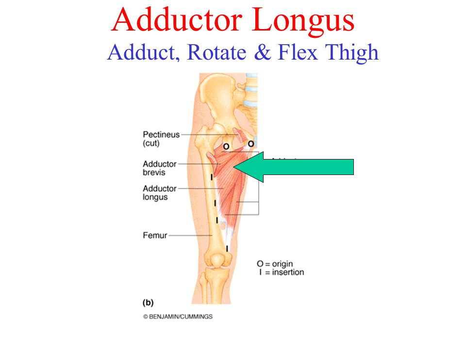 Adduct, Rotate & Flex Thigh Laterally