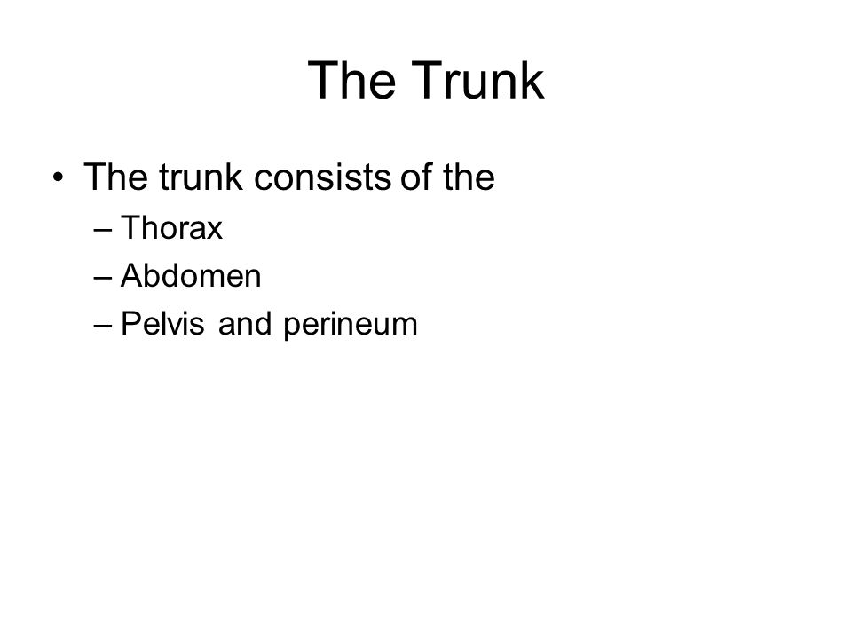 The Trunk The trunk consists of the Thorax Abdomen Pelvis and perineum