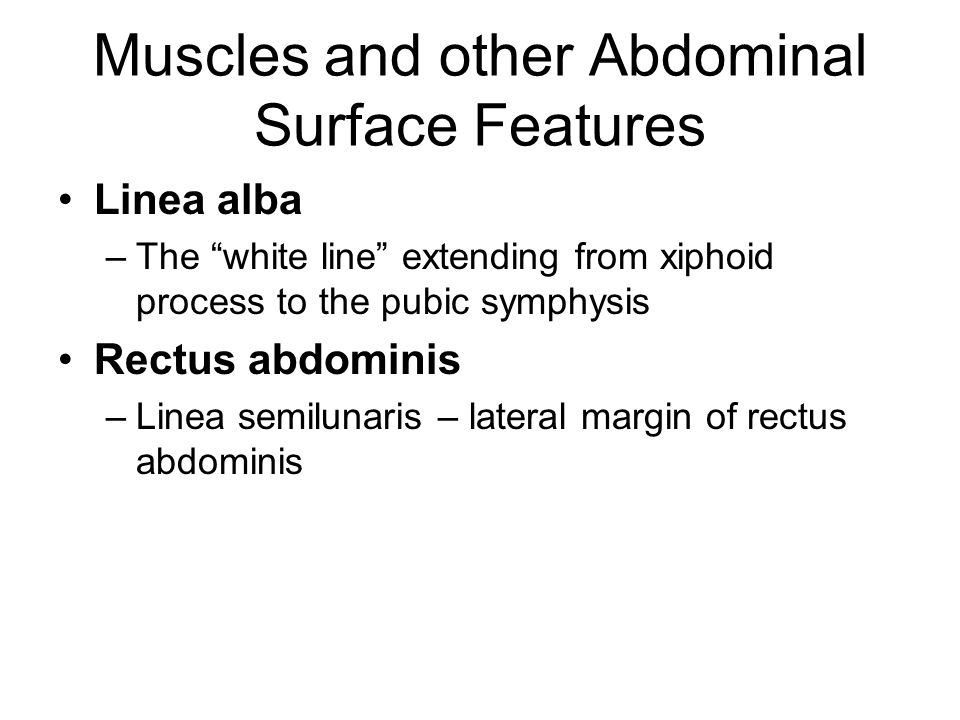 Muscles and other Abdominal Surface Features