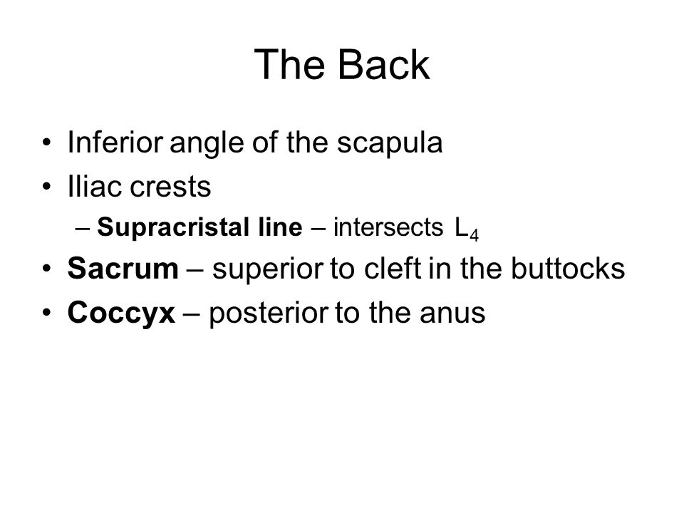 The Back Inferior angle of the scapula Iliac crests