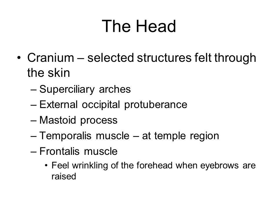 The Head Cranium – selected structures felt through the skin