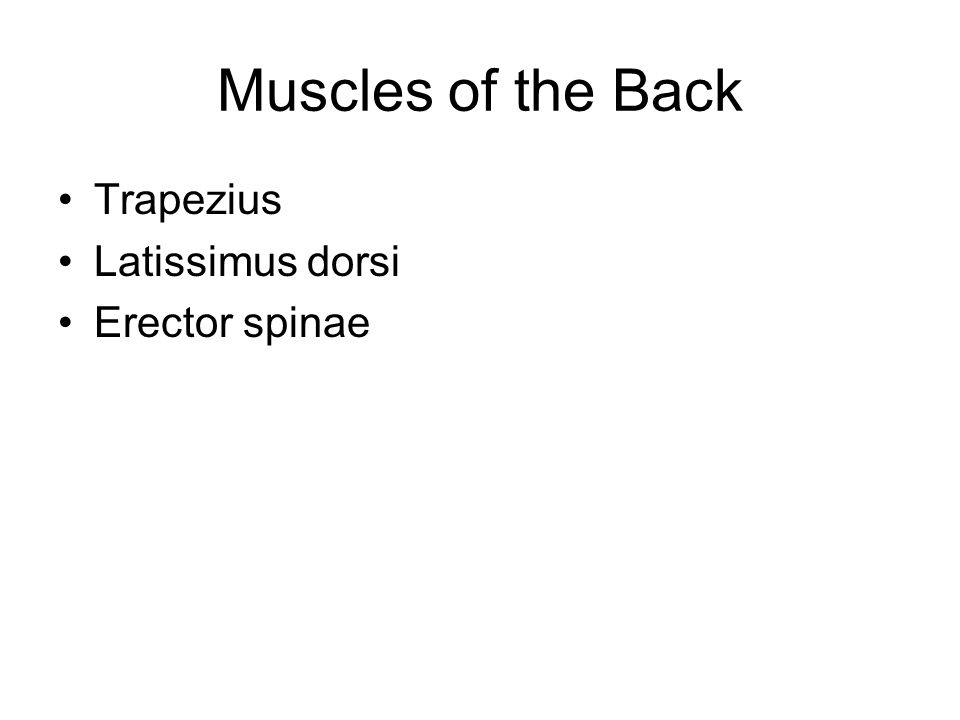 Muscles of the Back Trapezius Latissimus dorsi Erector spinae