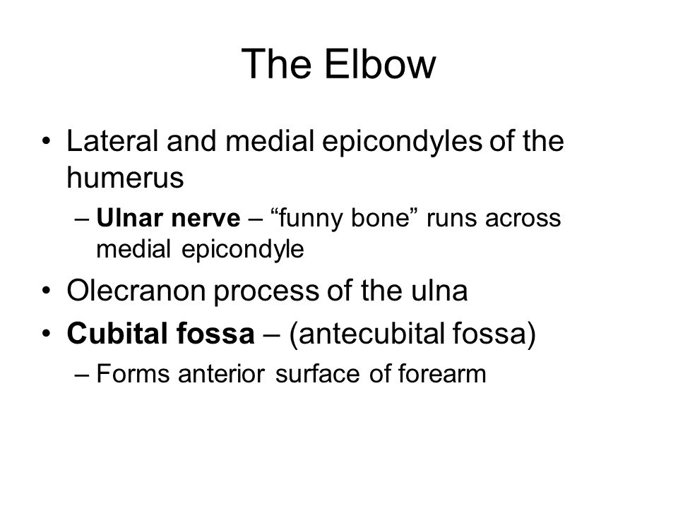 The Elbow Lateral and medial epicondyles of the humerus