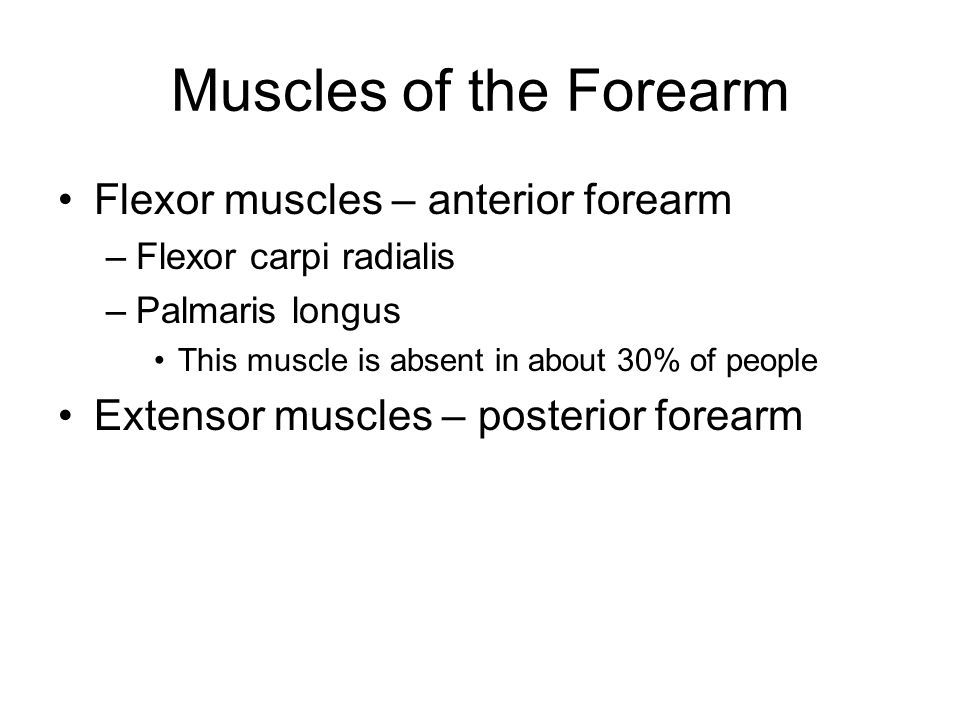 Muscles of the Forearm Flexor muscles – anterior forearm