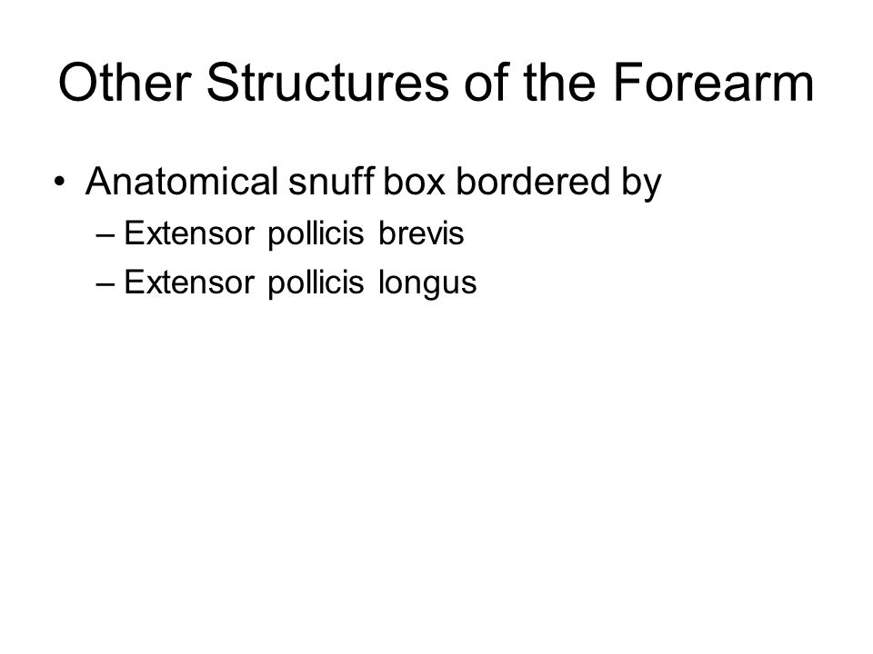 Other Structures of the Forearm