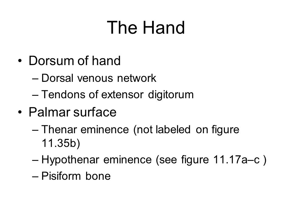 The Hand Dorsum of hand Palmar surface Dorsal venous network
