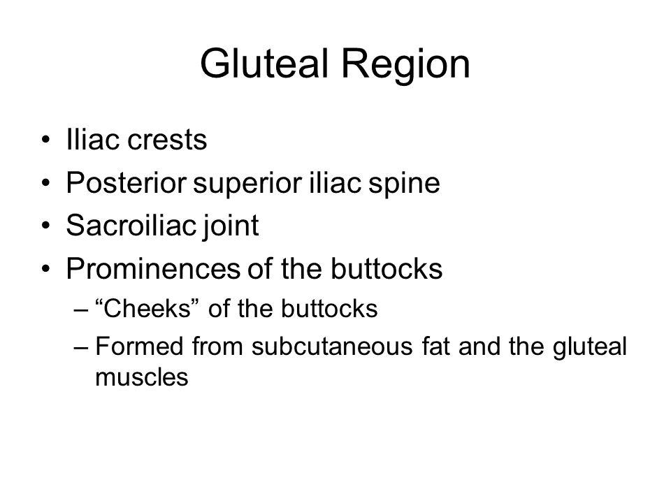 Gluteal Region Iliac crests Posterior superior iliac spine