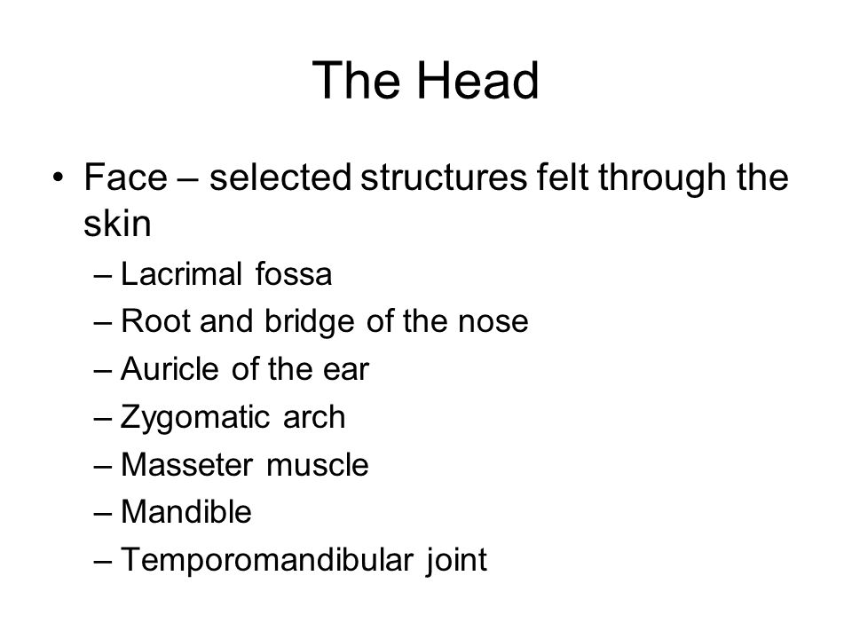 The Head Face – selected structures felt through the skin