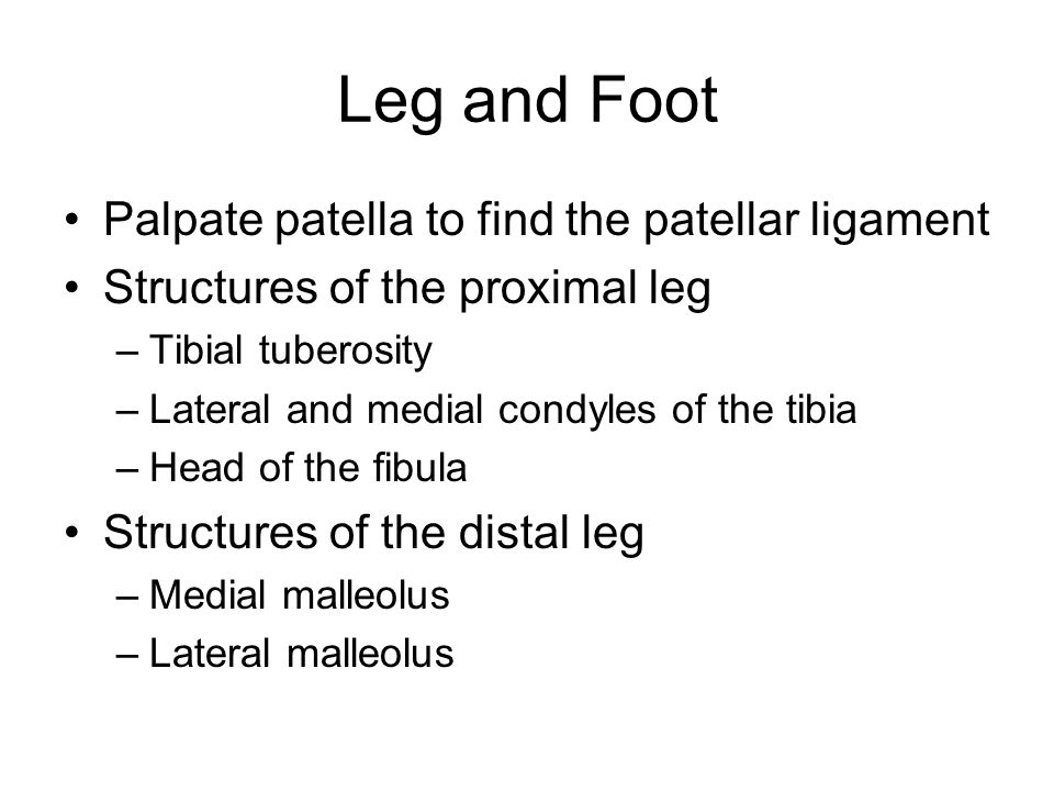 Leg and Foot Palpate patella to find the patellar ligament