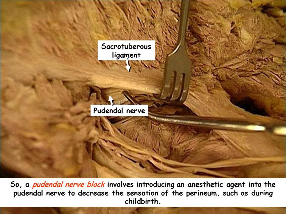 Sacrotuberous ligament