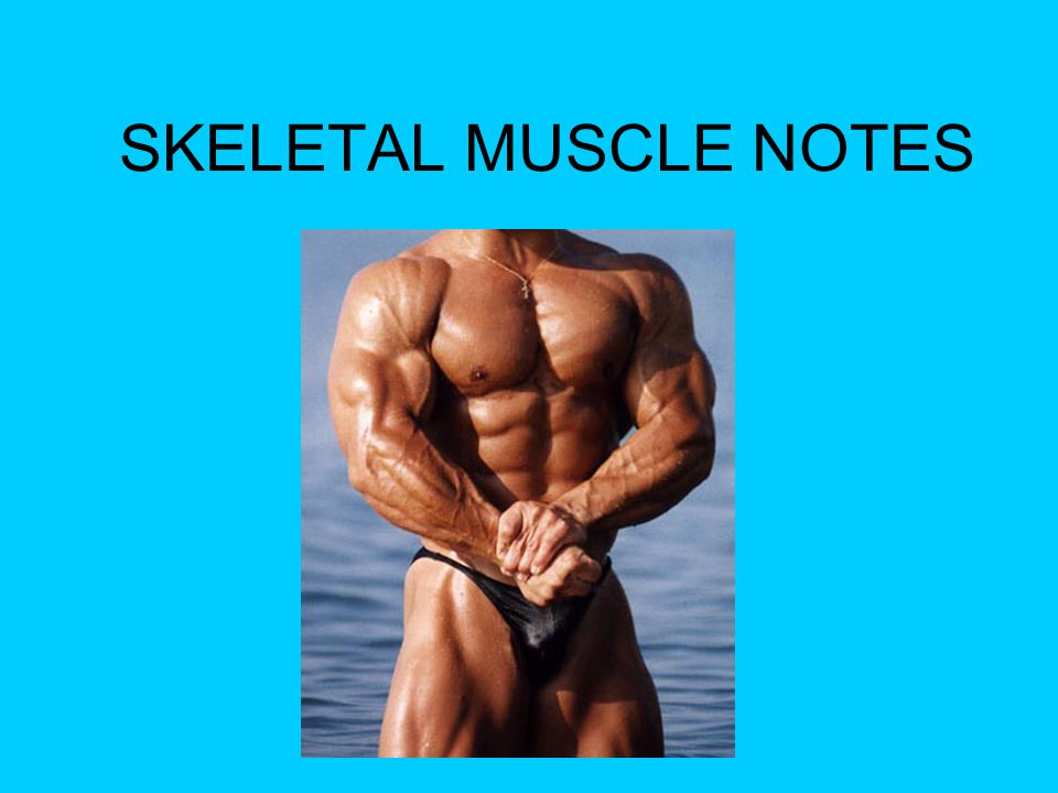 SKELETAL MUSCLE NOTES