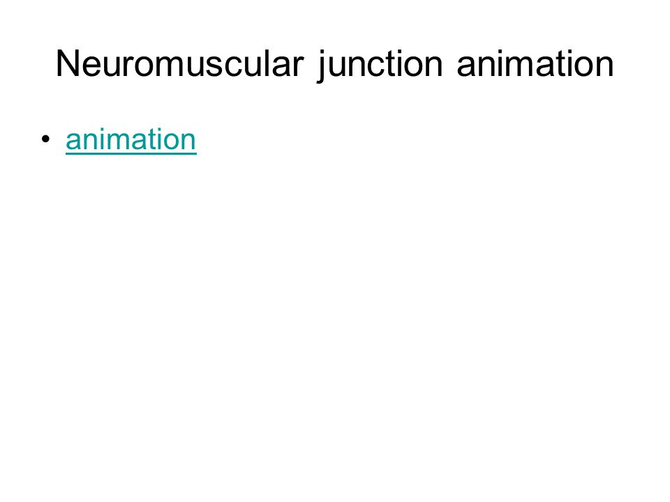 Neuromuscular junction animation