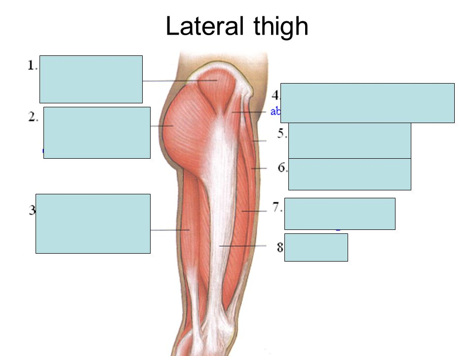 Lateral thigh