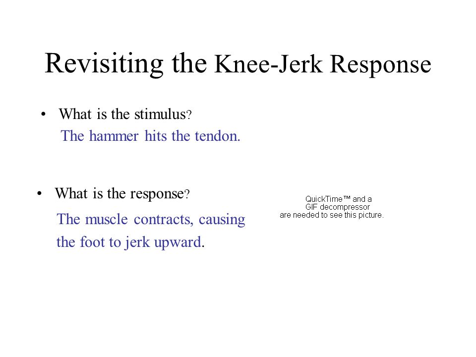 Revisiting the Knee-Jerk Response