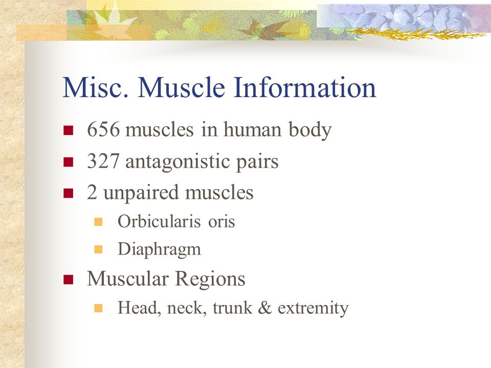 Misc. Muscle Information