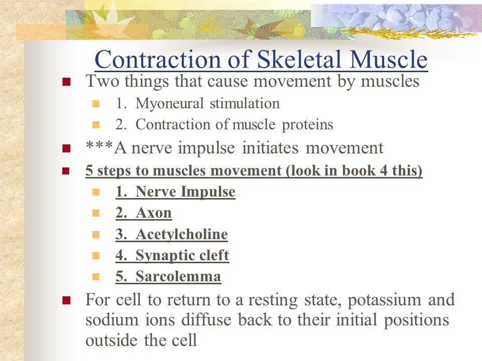 Contraction of Skeletal Muscle