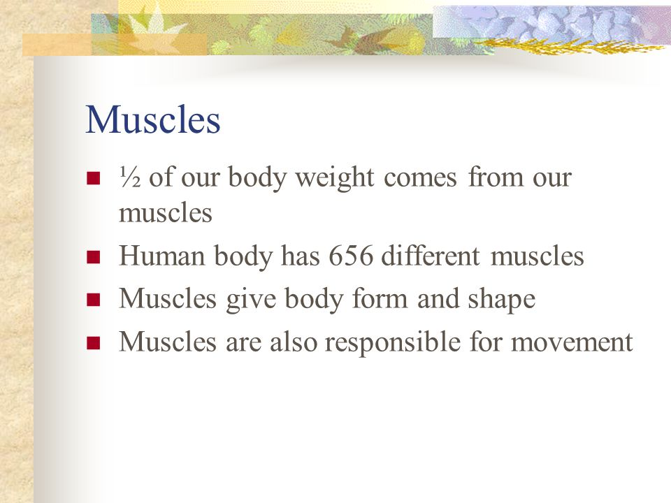 Muscles ½ of our body weight comes from our muscles