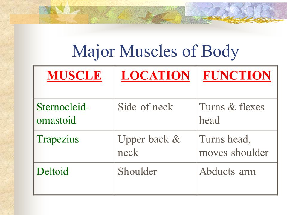 Major Muscles of Body MUSCLE LOCATION FUNCTION Sternocleid-omastoid