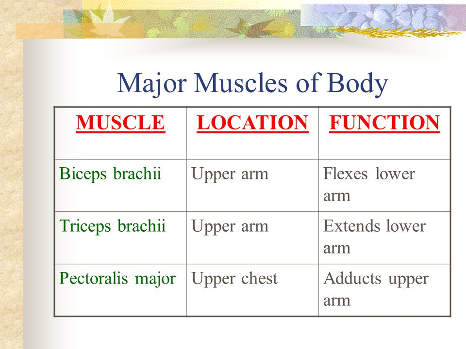 Major Muscles of Body MUSCLE LOCATION FUNCTION Biceps brachii