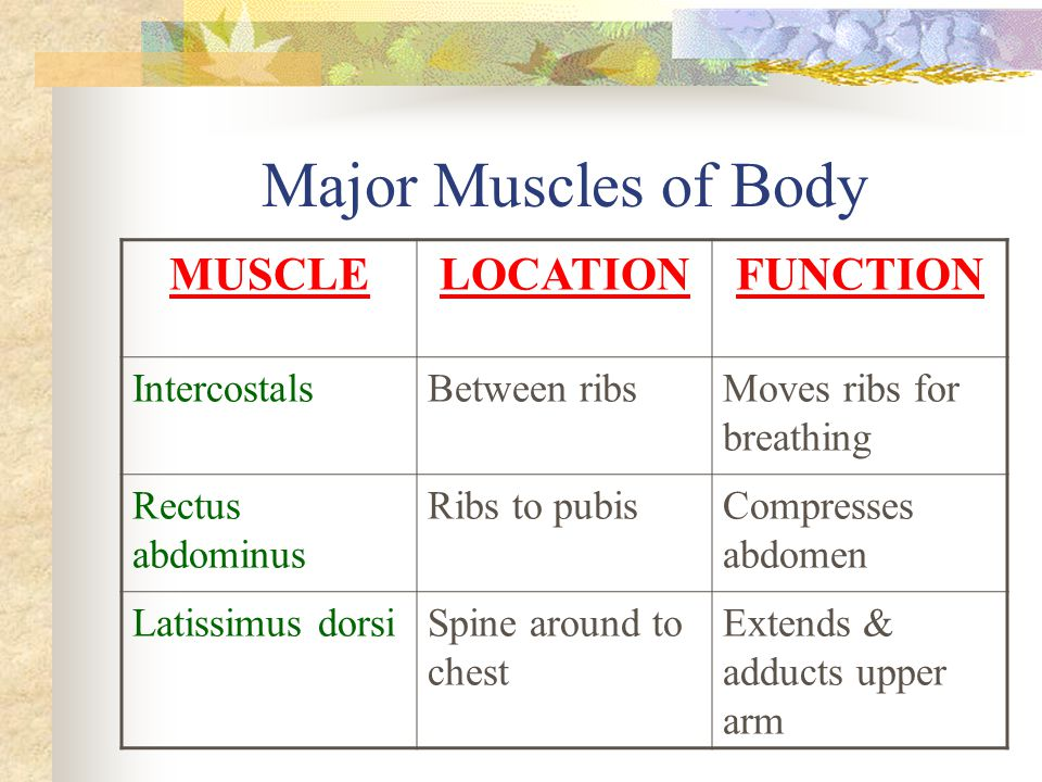Major Muscles of Body MUSCLE LOCATION FUNCTION Intercostals