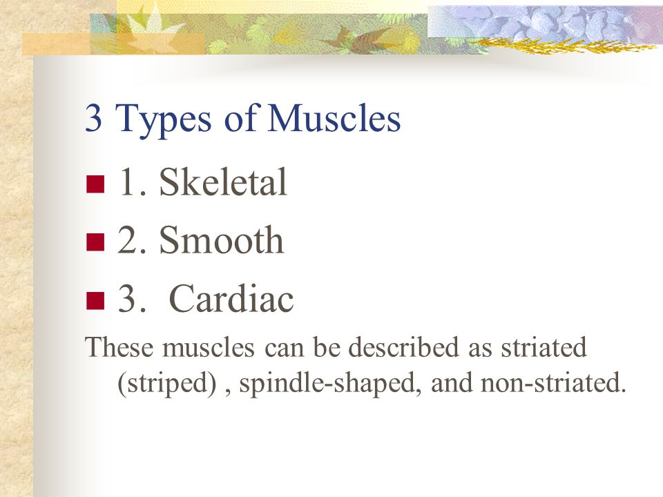 3 Types of Muscles 1. Skeletal 2. Smooth 3. Cardiac