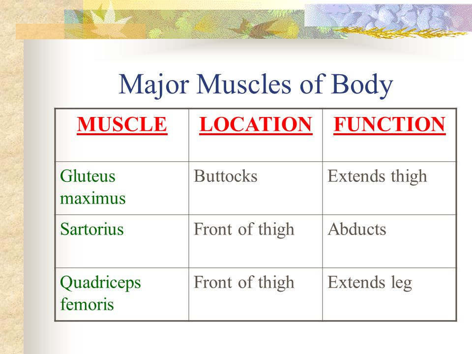 Major Muscles of Body MUSCLE LOCATION FUNCTION Gluteus maximus