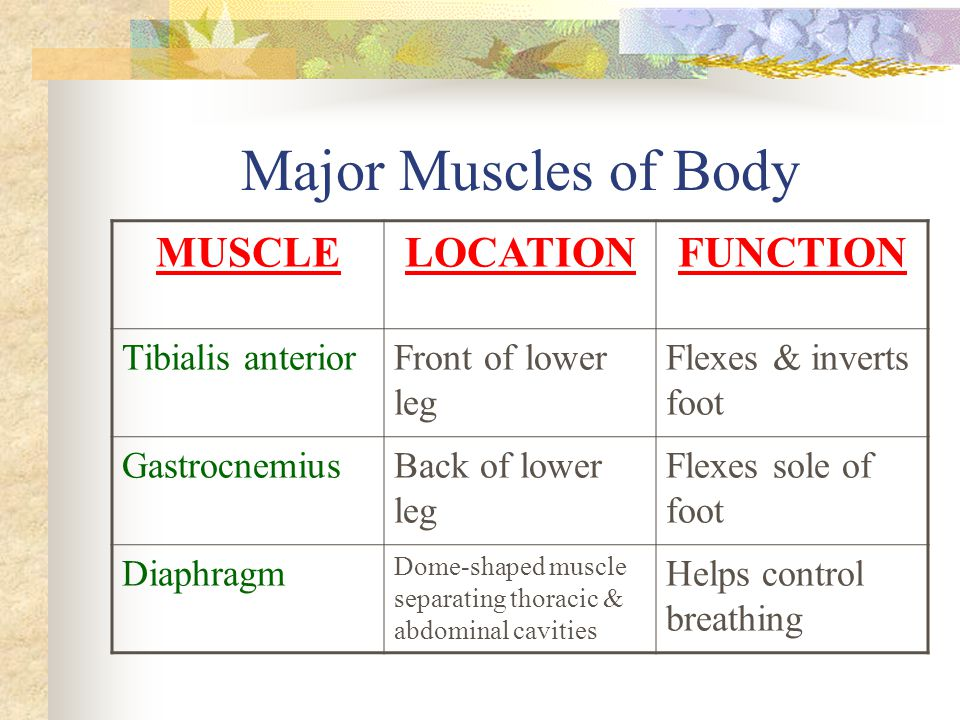 Major Muscles of Body MUSCLE LOCATION FUNCTION Tibialis anterior