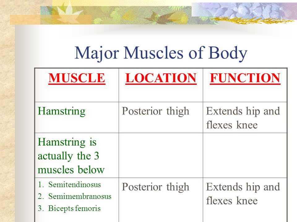 Major Muscles of Body MUSCLE LOCATION FUNCTION Hamstring