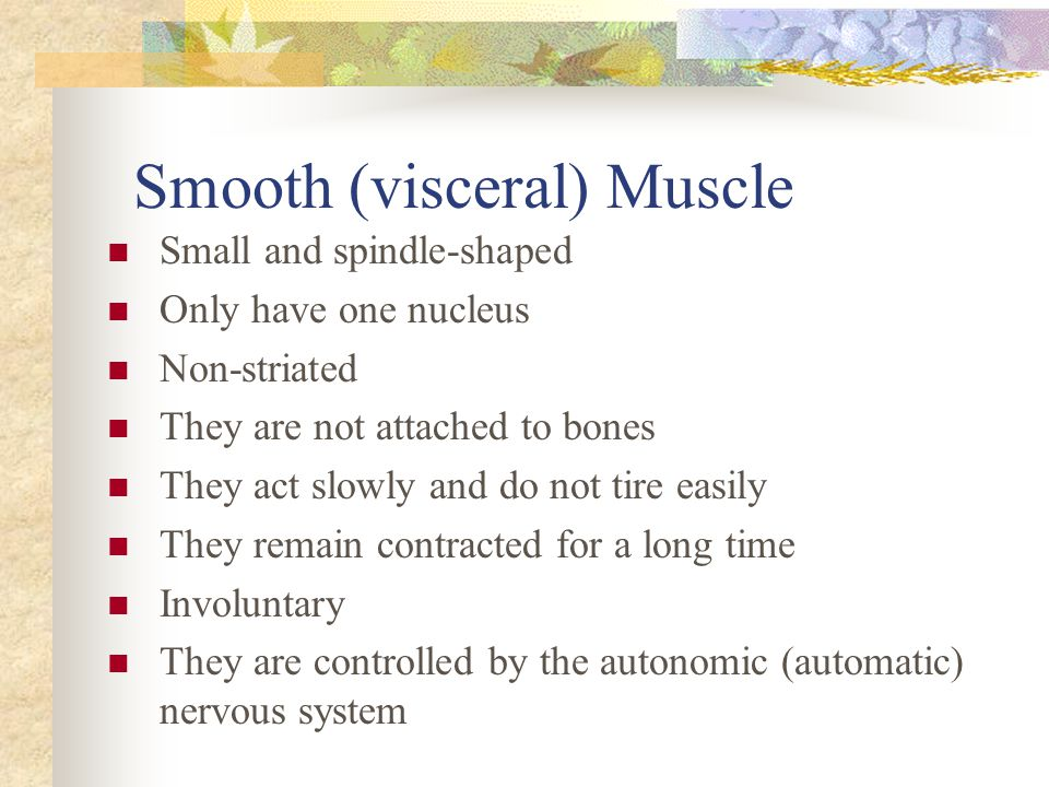 Smooth (visceral) Muscle