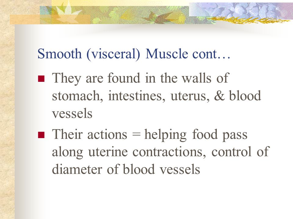 Smooth (visceral) Muscle cont…