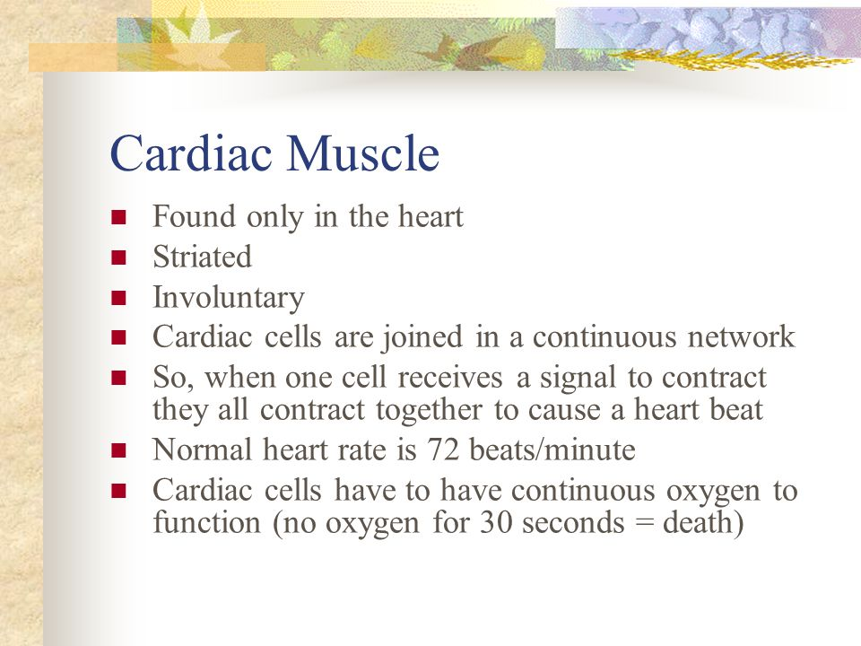 Cardiac Muscle Found only in the heart Striated Involuntary