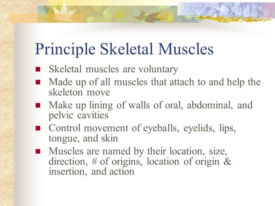 Principle Skeletal Muscles