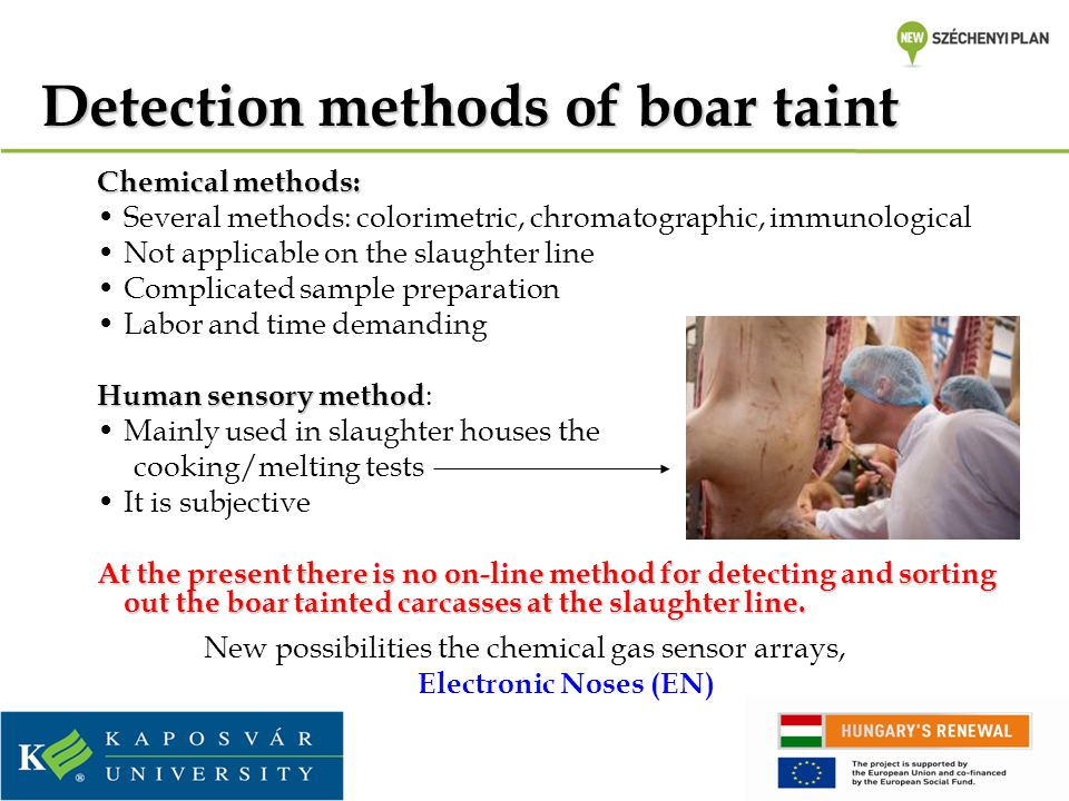 Detection methods of boar taint