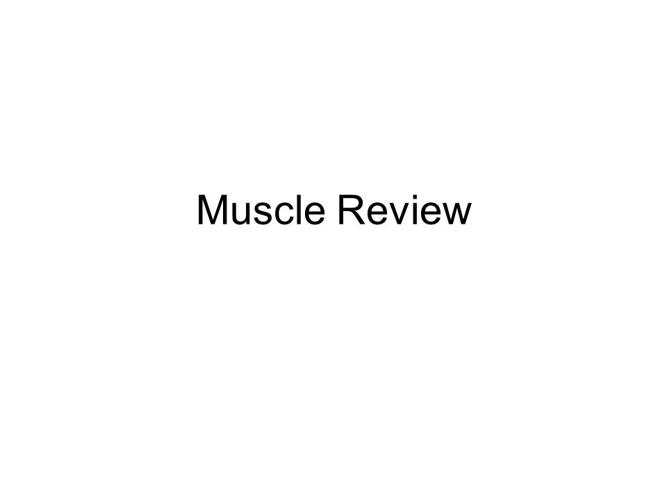 Muscle Review