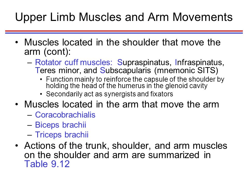Upper Limb Muscles and Arm Movements