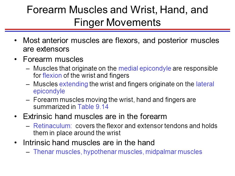 Forearm Muscles and Wrist, Hand, and Finger Movements