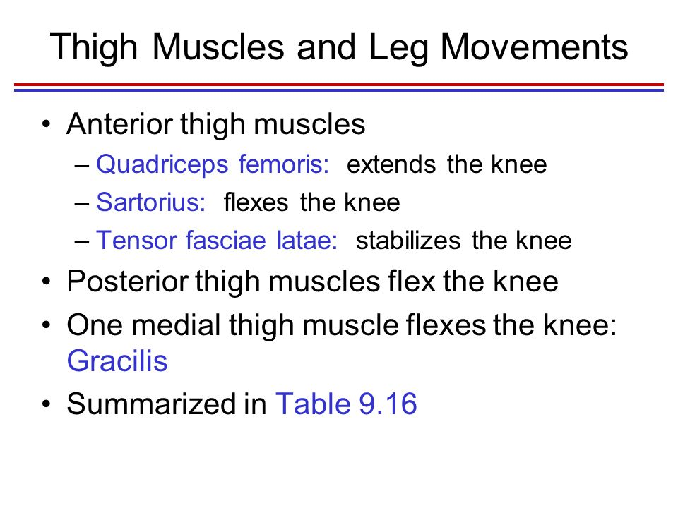 Thigh Muscles and Leg Movements