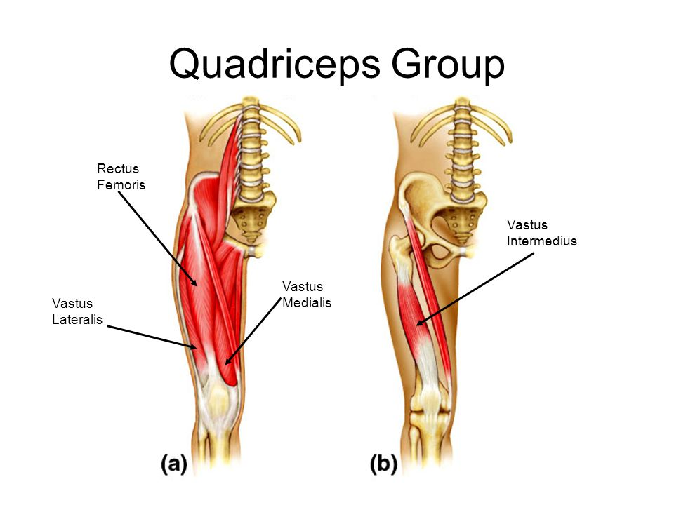 Quadriceps Group Rectus Femoris Vastus Intermedius Vastus Medialis