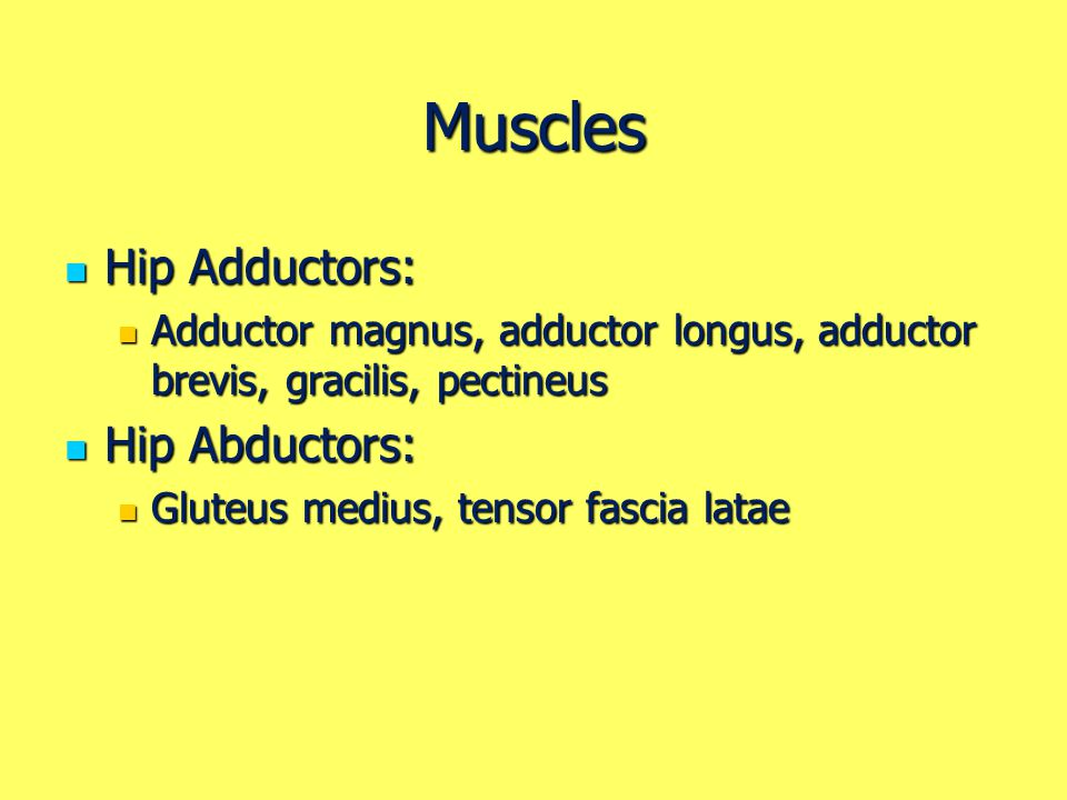 Muscles Hip Adductors: Hip Abductors:
