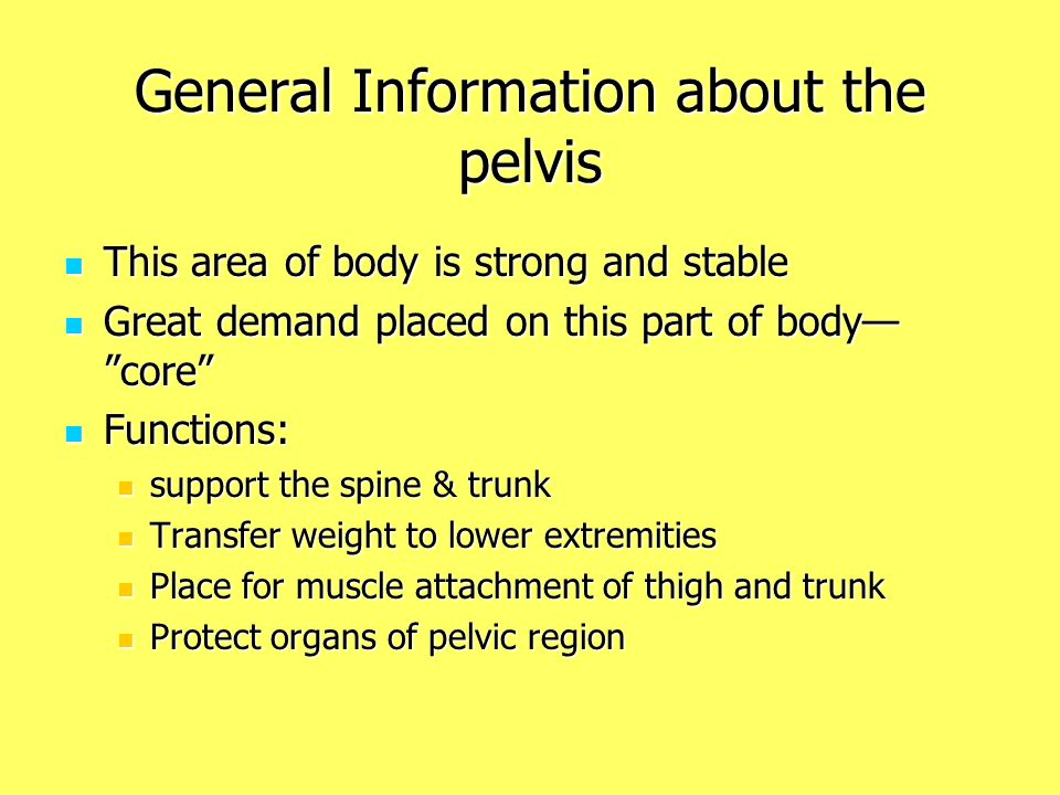 General Information about the pelvis