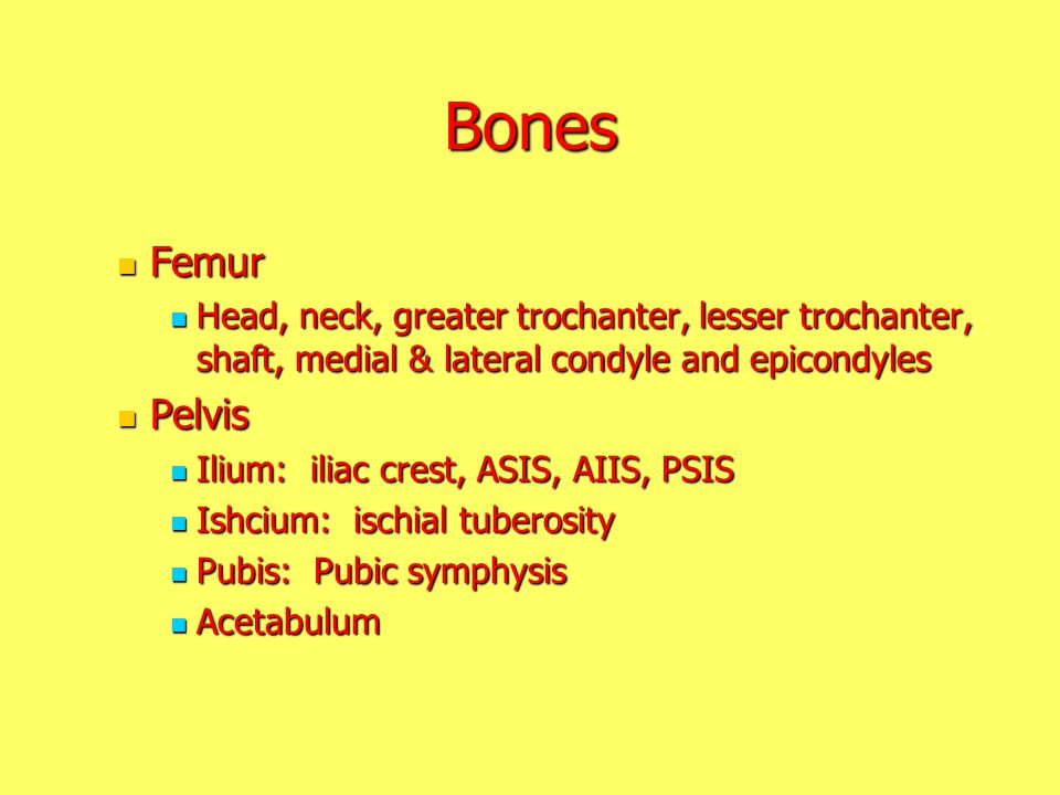 Bones Femur. Head, neck, greater trochanter, lesser trochanter, shaft, medial & lateral condyle and epicondyles.