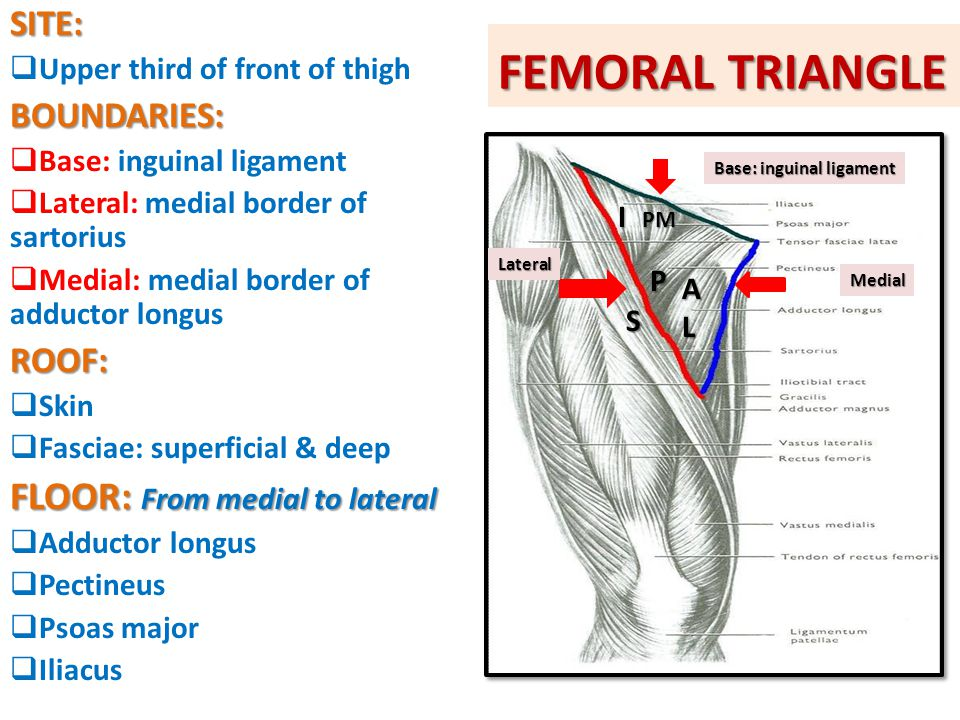 FEMORAL TRIANGLE FLOOR: From medial to lateral SITE: BOUNDARIES: ROOF: