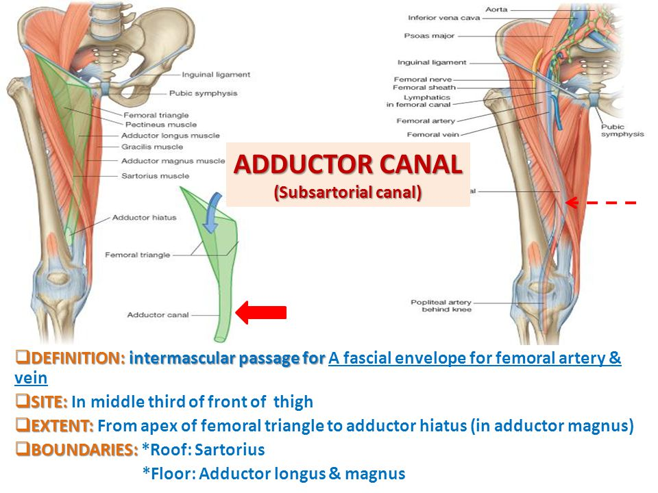 ADDUCTOR CANAL (Subsartorial canal)