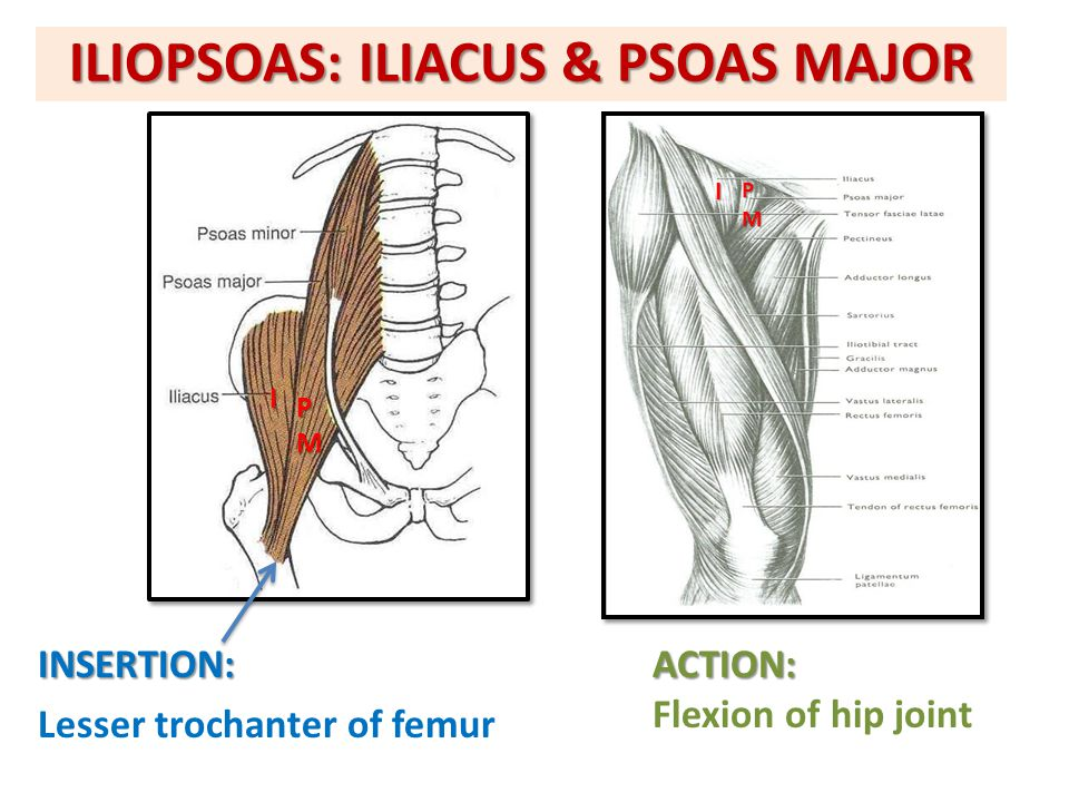 ILIOPSOAS: ILIACUS & PSOAS MAJOR