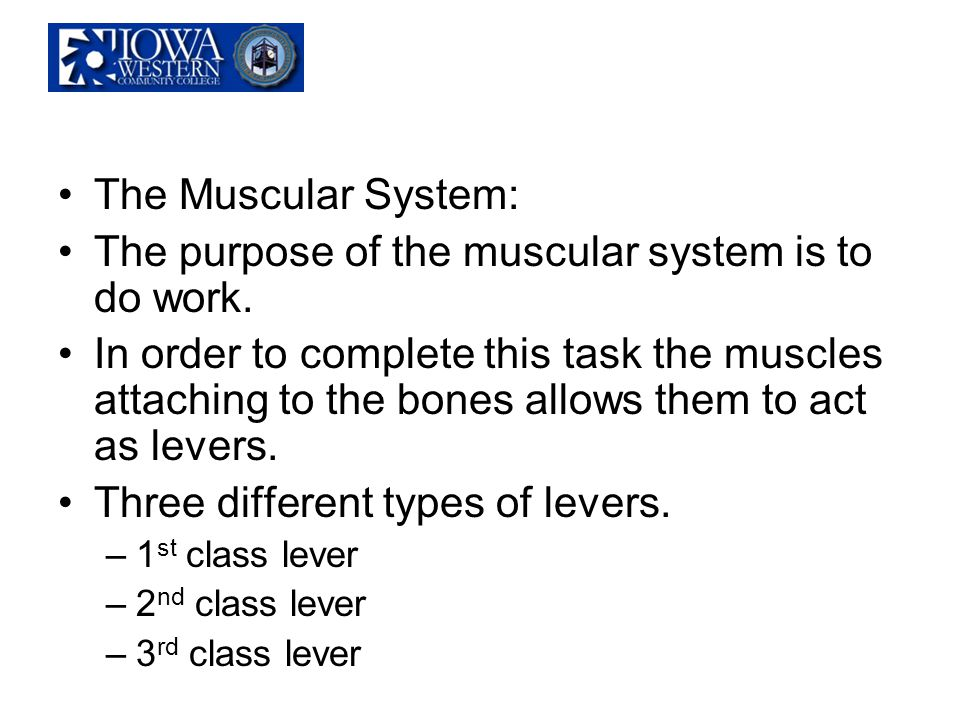 The purpose of the muscular system is to do work.