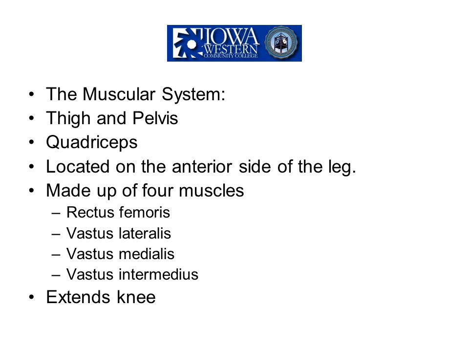 Located on the anterior side of the leg. Made up of four muscles