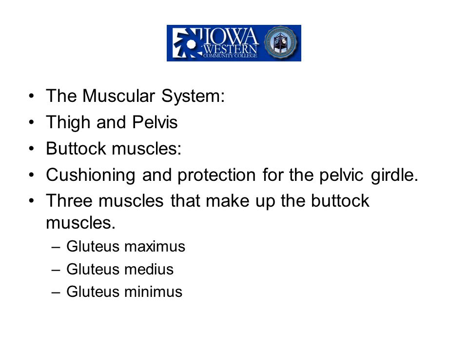 Cushioning and protection for the pelvic girdle.