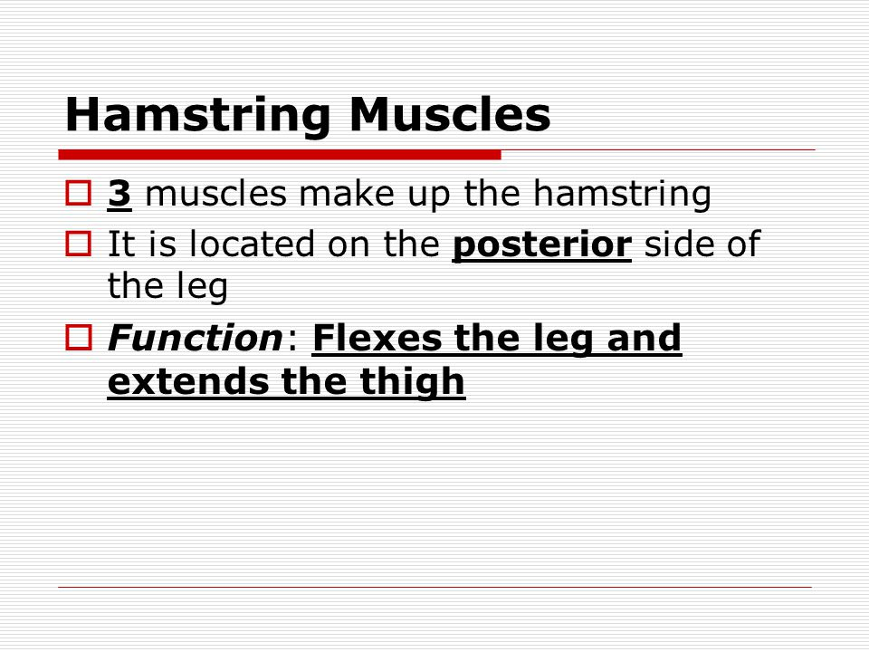 Hamstring Muscles Function: Flexes the leg and extends the thigh