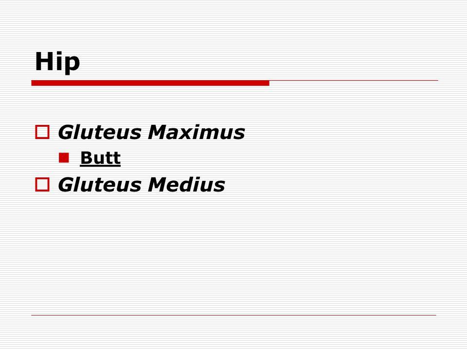 Hip Gluteus Maximus Butt Gluteus Medius